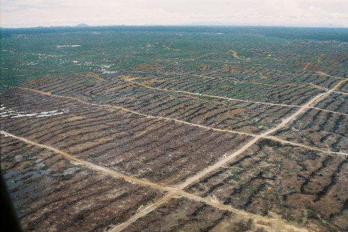 Non à l'arrivée d'une usine d'huile de palme en Languedoc
